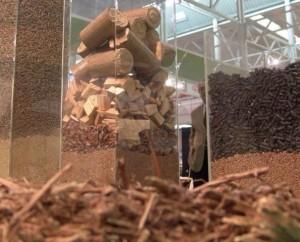 Varios tipos de biomasa